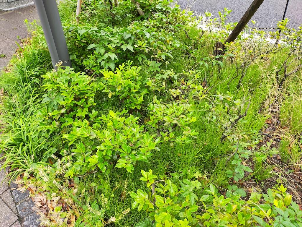 Reno3 A植物