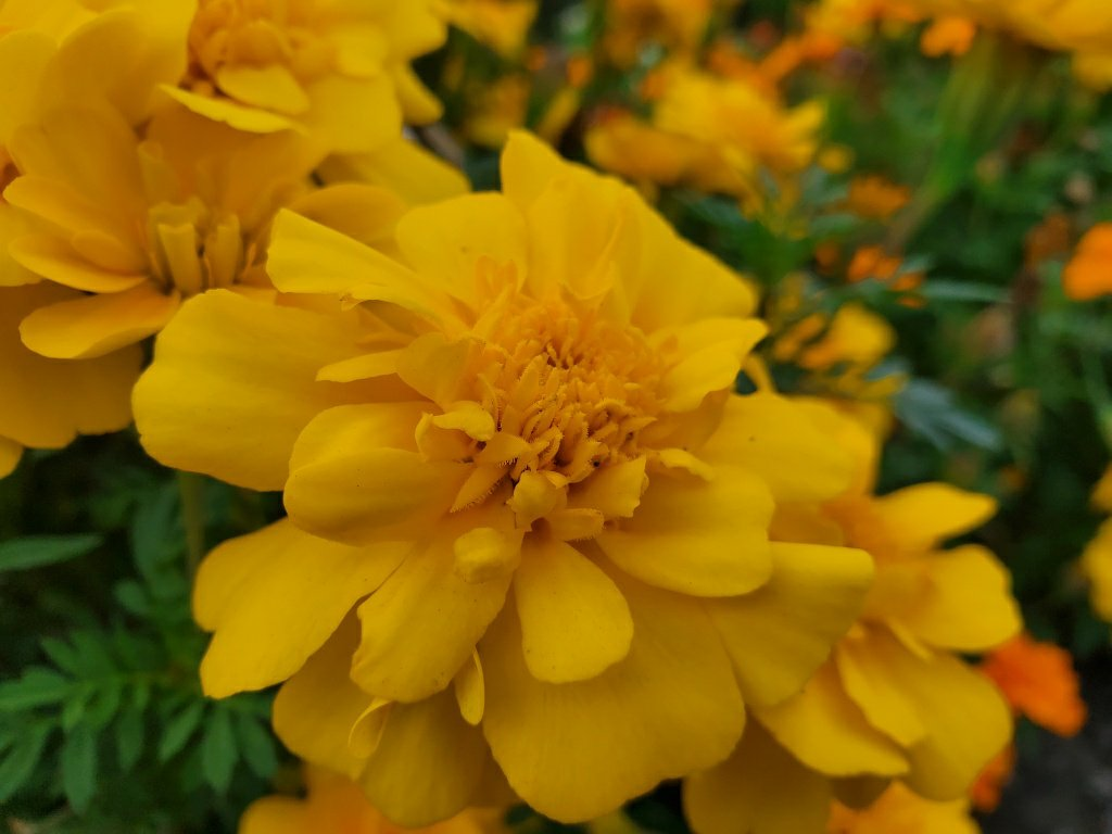 Note10+の花写真