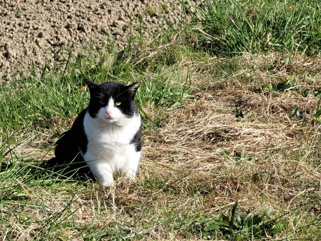 Galaxy Note20 Ultraで撮影した猫